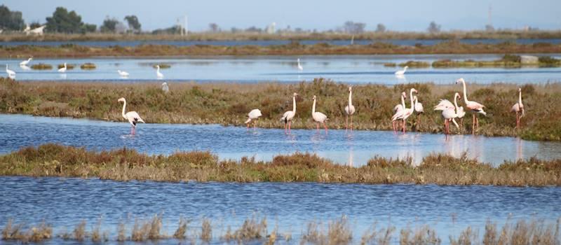 flamingos-at-the-ebro-delta_desconnect