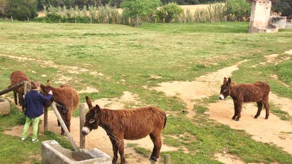 leonardo-feeding-the-donkeys-of-can-llorens_desconnect_600-x-339